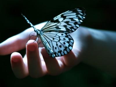 [تصویر:  butterfly.jpg]